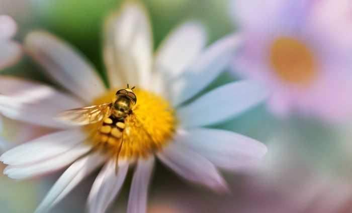 Необычные фотографии насекомых 1