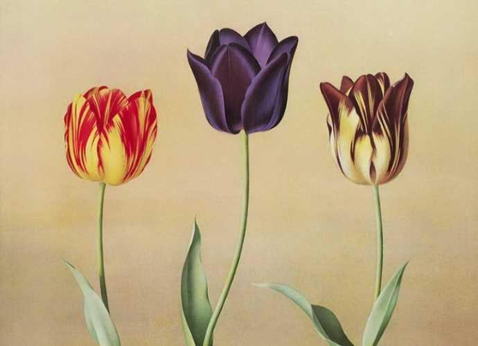 Paul Jones. Акварельные рисунки цветов 333