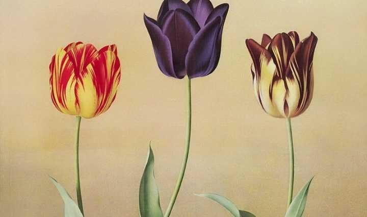 Paul Jones. Акварельные рисунки цветов 1