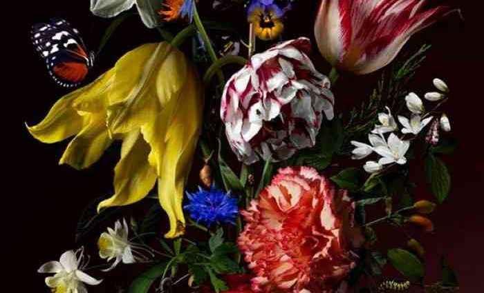 Натюрморты с цветами. Bas Meeuws. Часть 2 (фотограф) 1