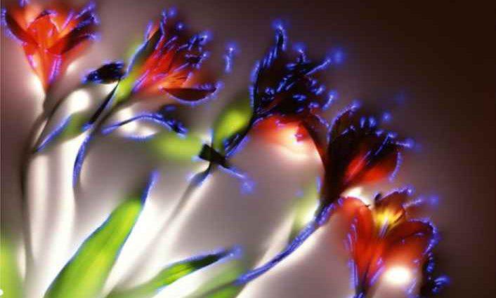 Robert Buelteman. Электрические цветы 1
