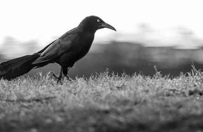 Введение в черно-белую пейзажную фотографию 14