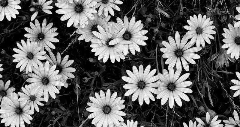 Эстетика в черно-белых фотографиях 1